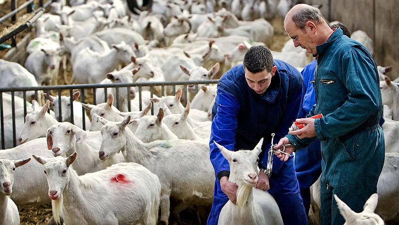 'De afgelopen jaren zijn 100 mensen overleden door dierziekten'