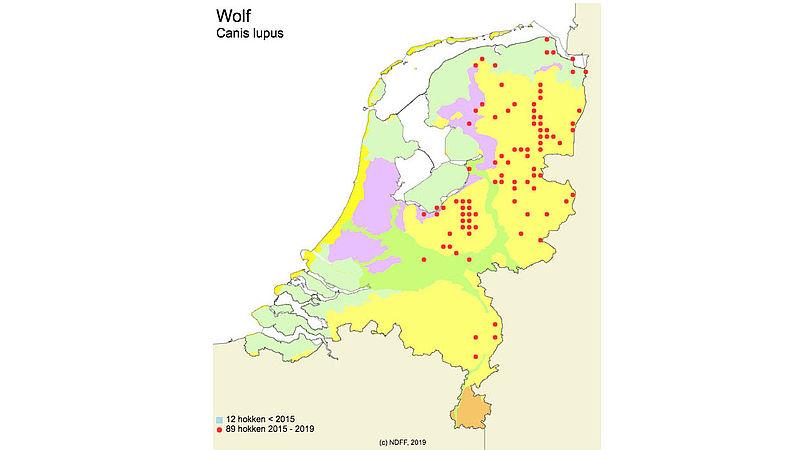 Signalering wolven Nederland in de afgelopen 5 jaar