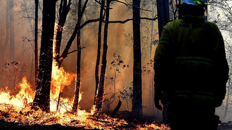 Bosbranden in Australië, begin deze maand
