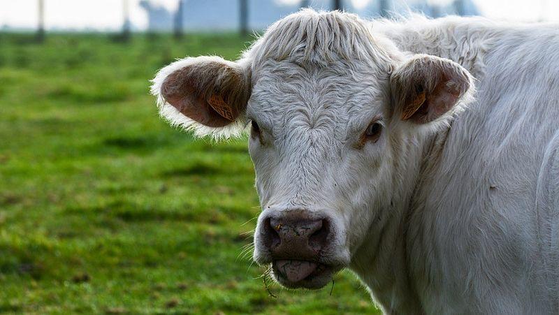 Stop met spreekwoordelijk dieren pesten, zegt PETA
