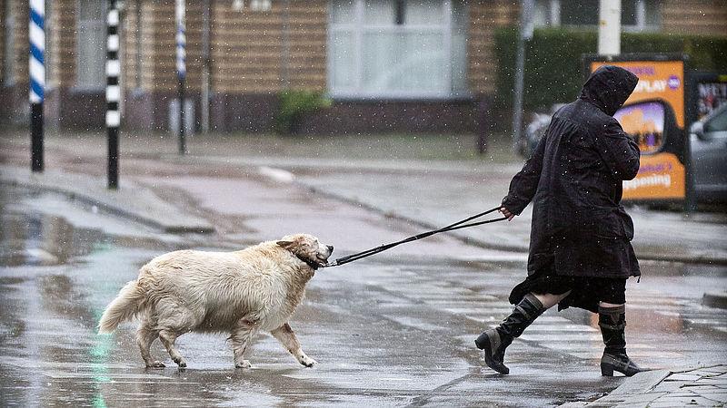 Hondeneigenaren houden riem verkeerd vast en dat zorgt voor serieus letsel