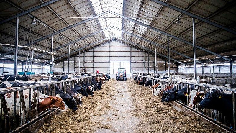 Hoeveel subsidie krijgt de Nederlandse boer? 'Je betaalt niet 130 maar 57 euro per jaar aan deze sector'