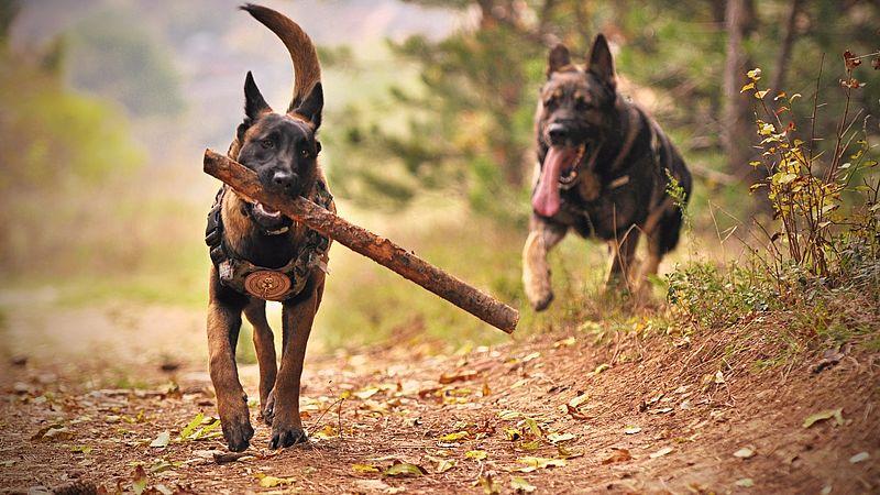 Boswachters zijn loslopende honden zat, aantal boetes verdubbeld
