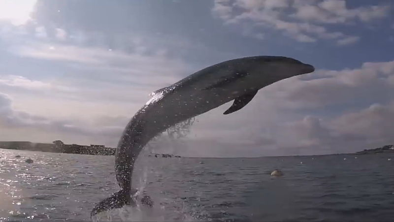 Melvin hielp 'Amsterdamse' dolfijn Zafar te bevrijden, maar waarschuwt ook: 'Ik zwem liever met orka's dan met deze dolfijn'