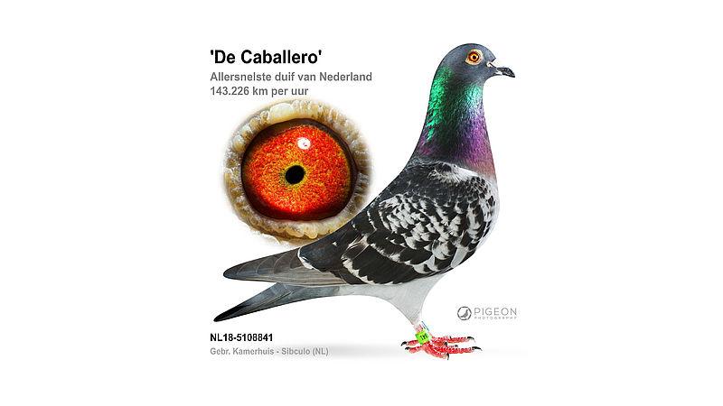 Staatsieportret van recordhouder Caballero 841