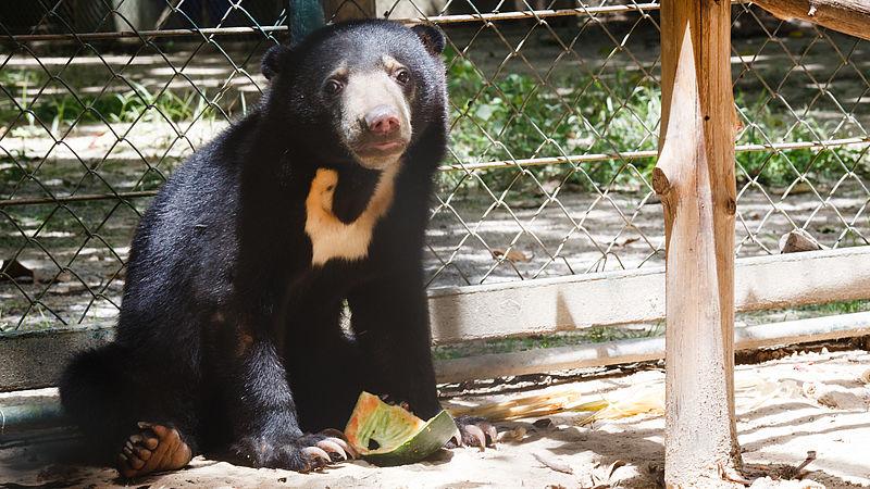 Een beer in de dierenopvang van Edwin Wiek