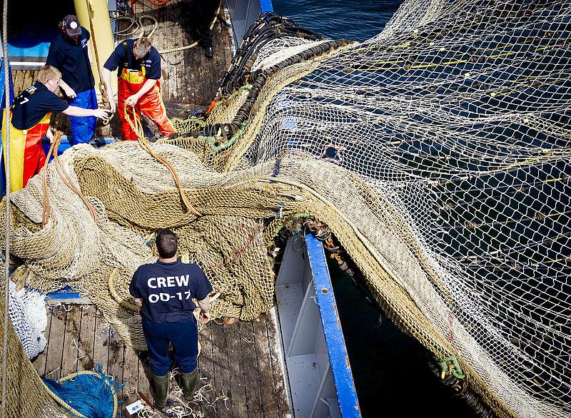 'Pulsvissen is enorm destructief voor het milieu'