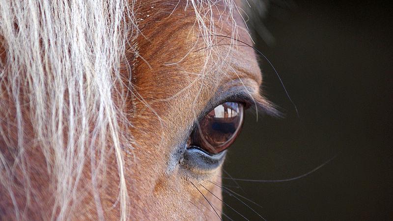 Paardenvleeskoning Jan F. voor de rechter, maar het blijft gissen wat er op je bord ligt
