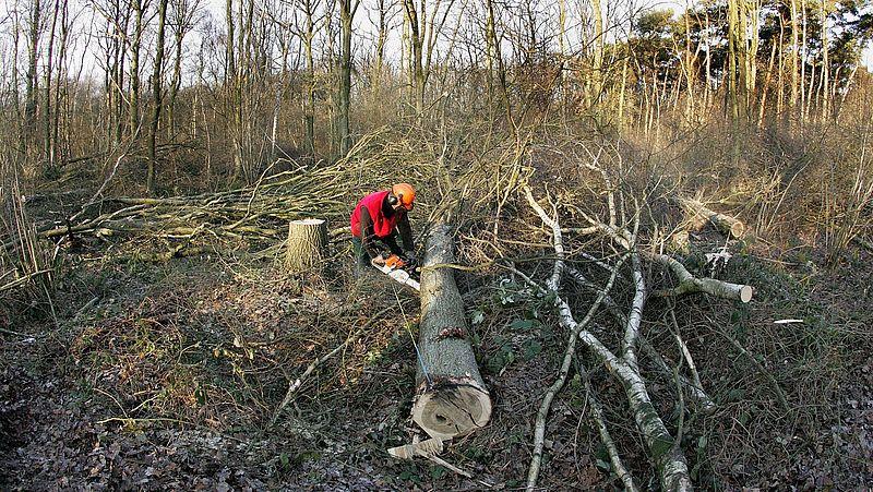 Natuur is hip, maar toch worden er in Nederland meer bomen gekapt dan er bij worden geplant