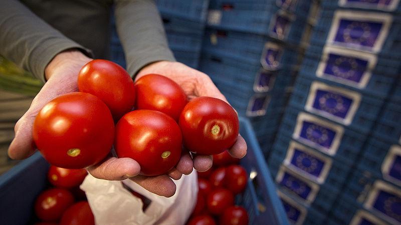 Tomaten kunnen slechter groeien door schaduw van windmolens