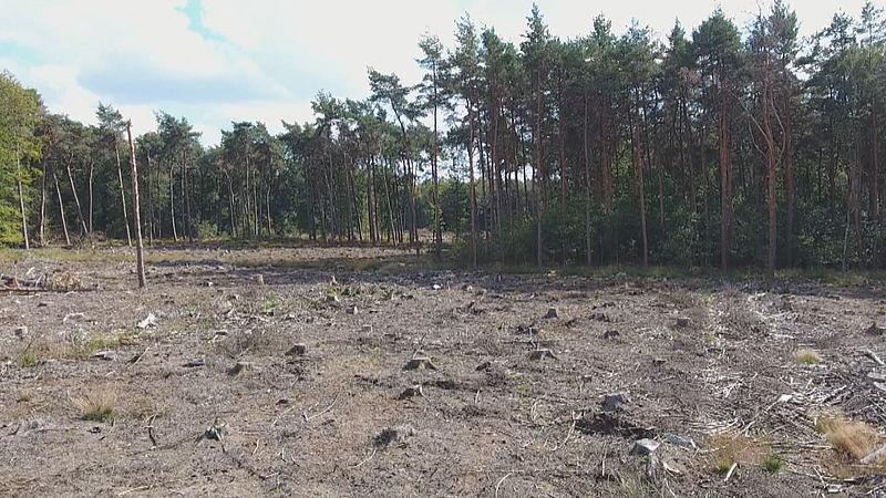 Kale bossen in Duitsland
