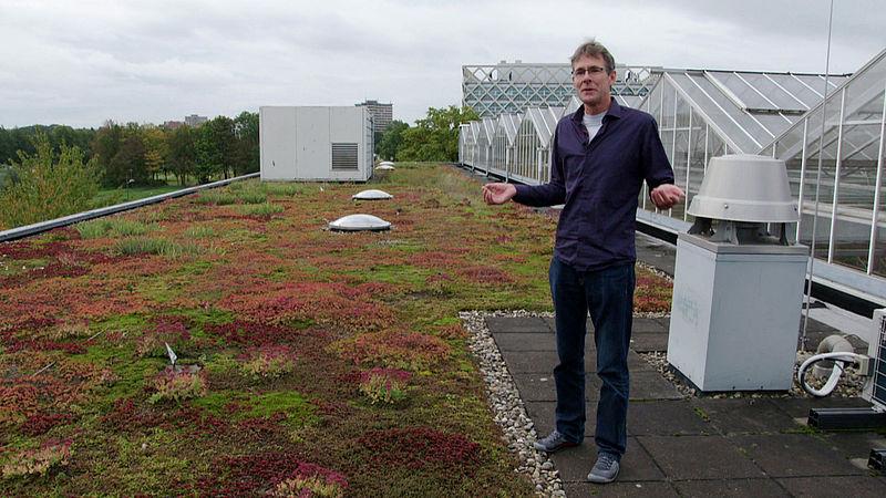 Dit is wat je kunt met een groen dak: 'Zelfs landbouwgewassen verbouwen is een optie'