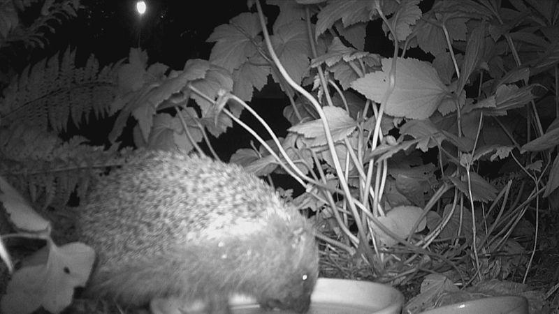 De egel in de tuin van Marjolein