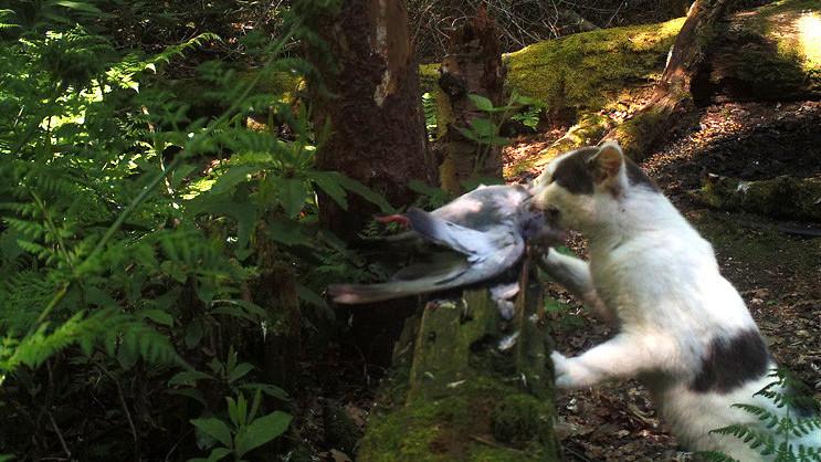 Onze huiskatten richten massale slachtpartijen aan in natuur: 'Hou je kat 's nachts binnen!'
