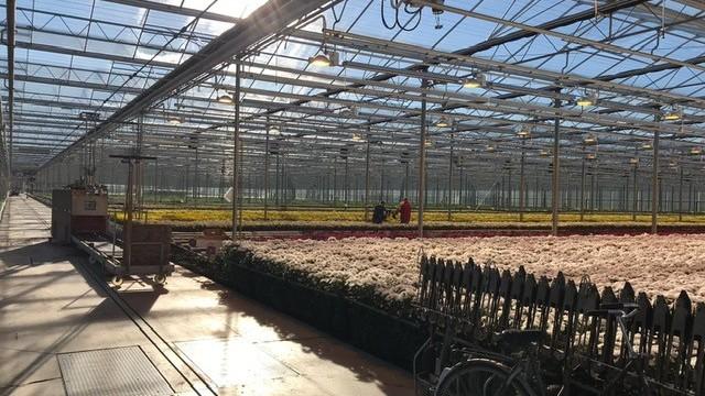 Bloemenkwekerij