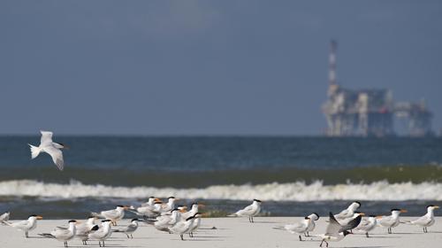 Shell wil oude boortorens hergebruiken in windparken