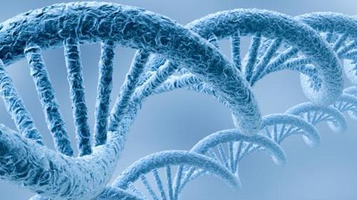 'Meerderheid voor DNA-databank'