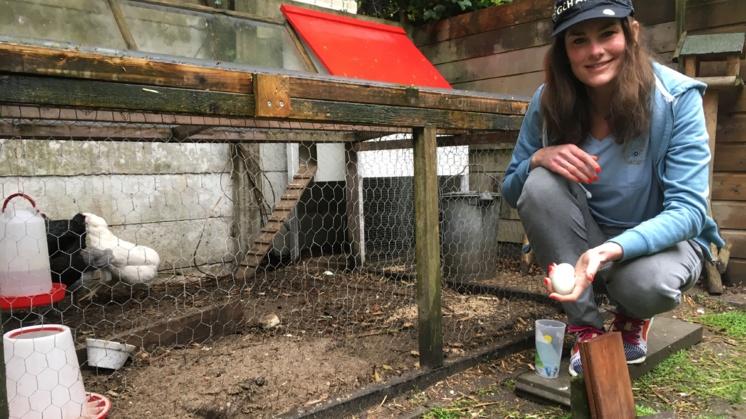 Diervriendelijke eieren steeds populairder