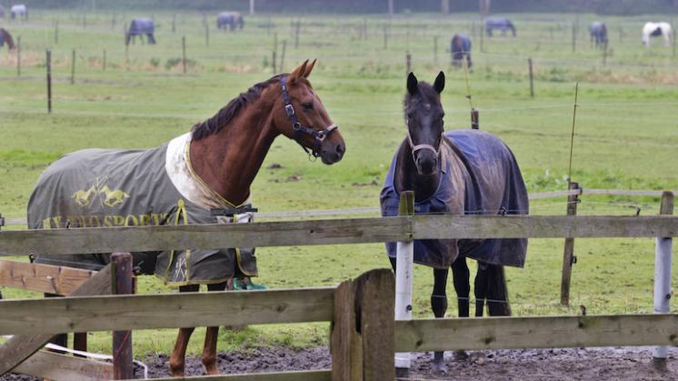 Paardenmishandelaar actief in Nederland