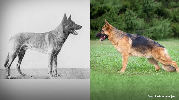 Hoe onze honden door de jaren heen veranderden in 5 foto's
