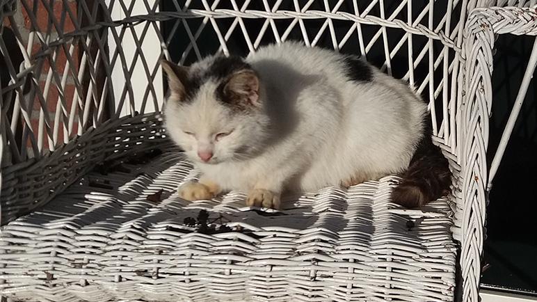 De kat van Henri Ruitenberg