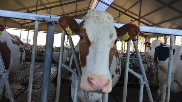 Afschaffing melkquotum, het einde van een tijdperk