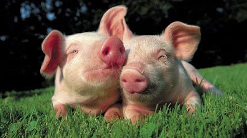 Uitslag enquête: Draagvlak groot voor vleesvrije dag